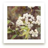 Fuzzy Wildflowers by Gray Star Design