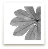 Leaf in Black & White