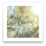 That Warm Pine Smell by Karen Kaul