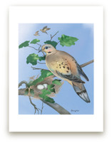 Mourning Dove by Tracy Ann