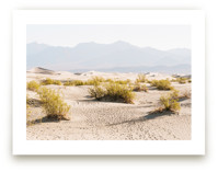 Desert Footsteps by Anna Western