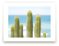 Cactus at the Sea by Dariela Cruz