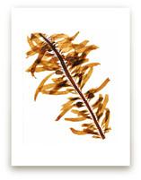kelp print 001 by aeryn donnelly design