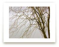 Dry vegetation over a l... by Celia Maria