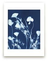 Eschscholzia californic... by raven erebus