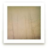 Trees In Fog Wall Art Prints