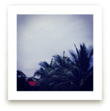 Palm Tree Dusk by Jessica Niles DeHoff