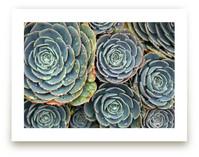 Raindrops on Succulents