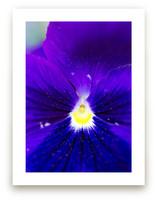 Purple Velvet by Giulia Doyle