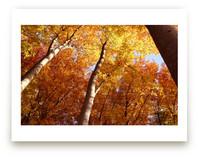 Soaring Fall