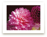 Pink Dahlia by A Maz Designs