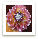 Hawaiian Dahlia by A Maz Designs