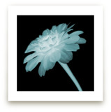 x-ray floral by Kate Cawood