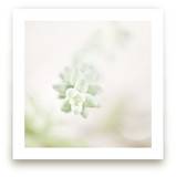 Soft Succulent No. 1