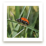 Lady Bug Two by Margaret Williams