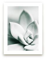 Mint Succulent by Karen Kardatzke
