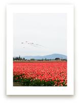 Kites in a Tulip Field