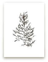kelp print 004 by aeryn donnelly design