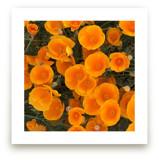 A Pop of Poppies by Skoodler Designs