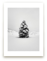 Tranquil Snow III