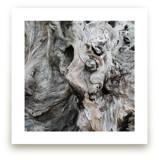 Driftwood by Honey Madison