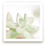 Soft Succulent No. 3
