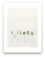 Poppy Pods by Monica Loos
