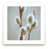 Fuzzy Catkins by LemonBirch Design