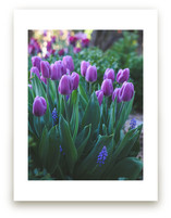 Tulips in the Morning by Vanessa Wyler