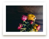 Ranunculus 2 by Keely Norton Owendoff