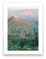 Grand Canyon Tree by Anna Western