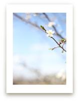 Pear Blossom Sky by Sara Curtis