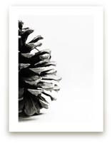 Pine Cone - Part 2