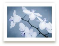 Orchids In Flight by Debra Butler
