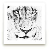 mr LION by Gail Schechter