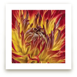 Flaming Dahlia by A Maz Designs