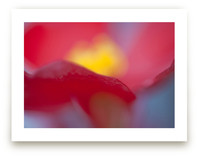 Primary Colors by Lynn Lehto