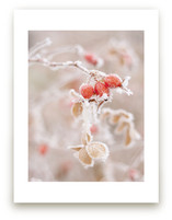 Frozen Berries by Sharon Rowan