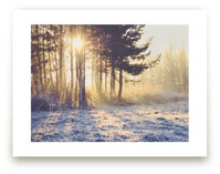 WINTER LIGHT by Stacy Cooke