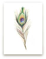 Peacock Feather by Amanda Paulson