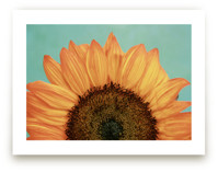 Happiness is a Sunflowe... by Debra Butler