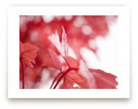 Scarlet Season by Karen Kaul