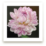 Pink White Waterlily Da... by A Maz Designs