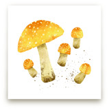 Yellow Mushrooms (Fly agaric)