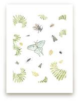 Woodland Moths and Inse... by Hallie Fischer