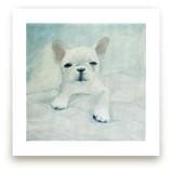 White French Bulldog Puppy Wall Art Prints