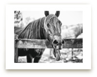 SILLY HORSE by Zanne Bedore