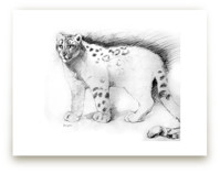 Snow Leopard by Tracy Ann