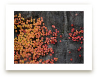 Fall Wall by LemonBirch Design