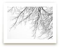 Winter White Branches